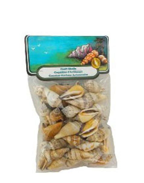 Brown Chula Seashells W/Header