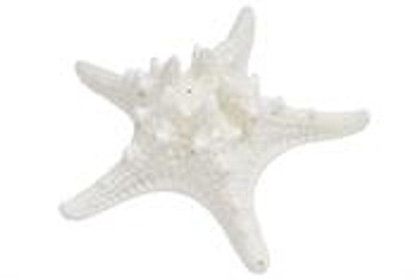 White Armoured Starfish