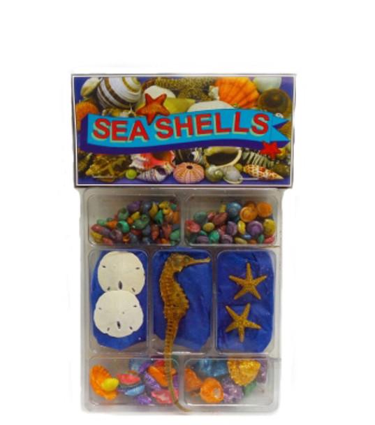 Dyed  Seashells,  Starfish & Sanddollar Collection