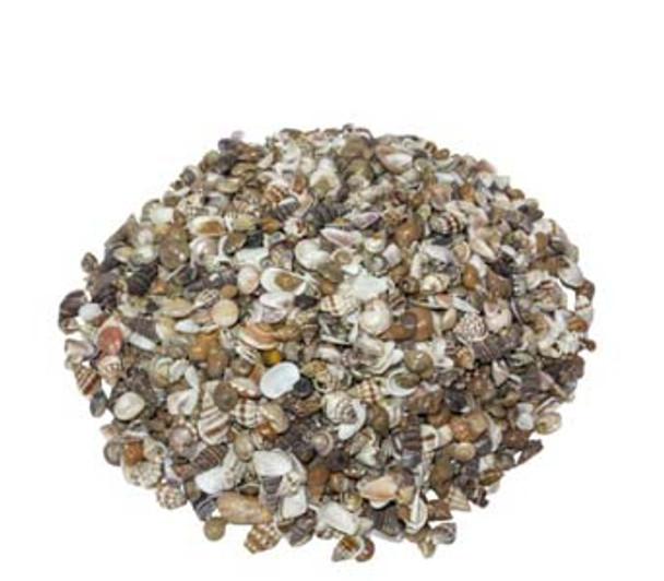 Ex Small Natural India Mix Seashells