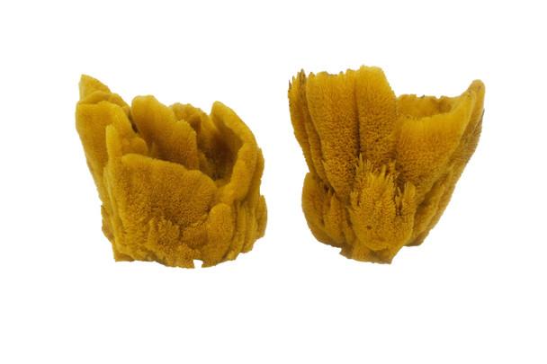 Vase Sponge