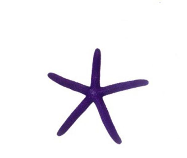 Dyed Purple Finger Starfish