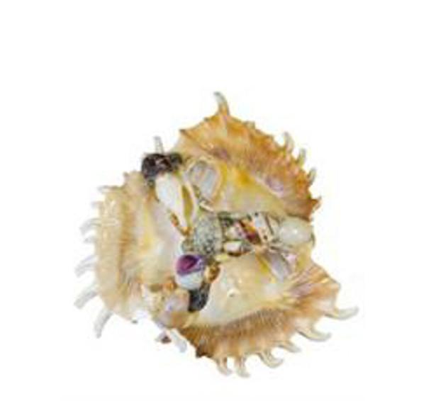 Lambis Seashell 3 Compartment Tray