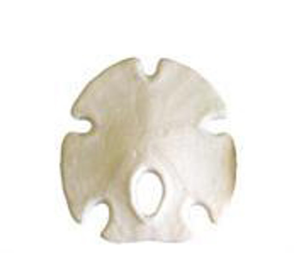 Mexican Arrowhead Sand Dollar