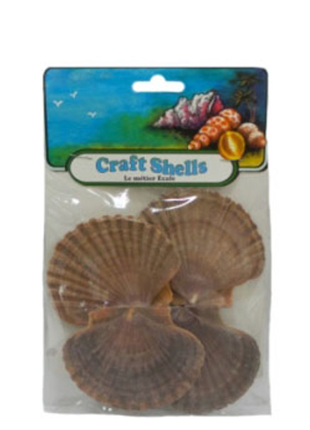 Mexican Flats Seashell - Craft Pack
