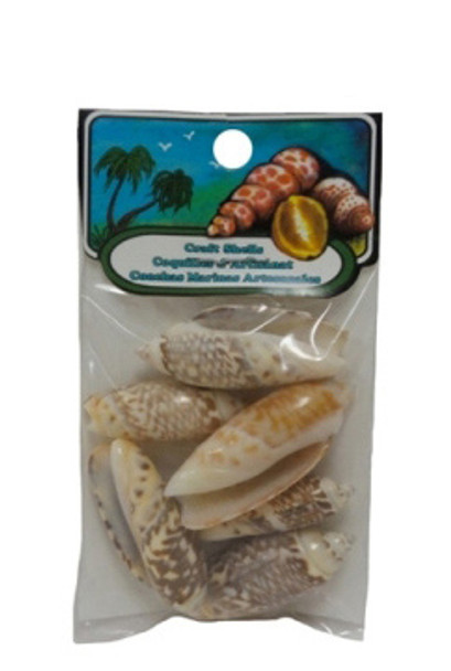 Oliva Gibbosa Seashell - Craft Pack