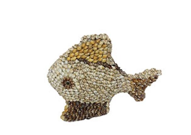 Nassa Fish