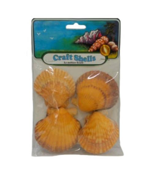 Orange Pecten Seashells