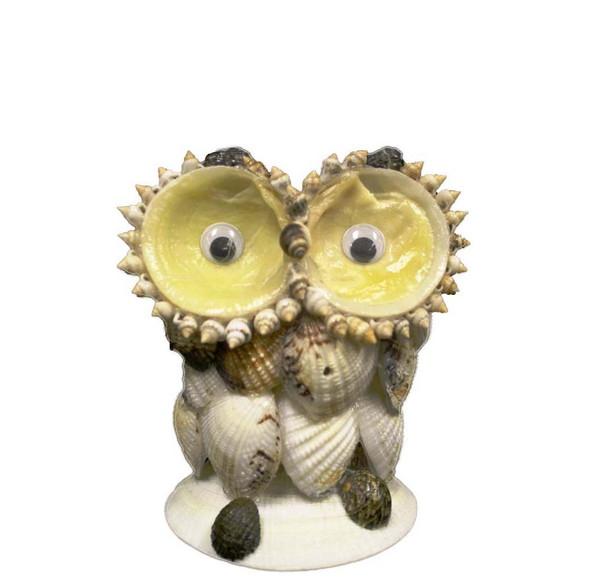Venus Clam Owl