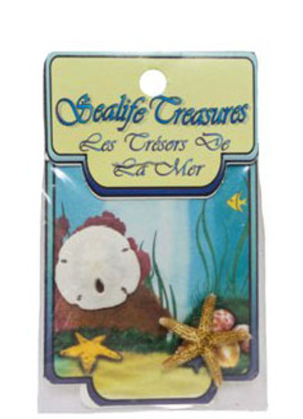 Sanddollar and Starfish
