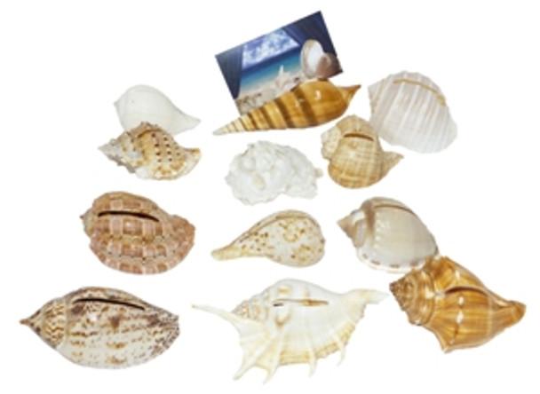 Seashells Cardholder Ass't