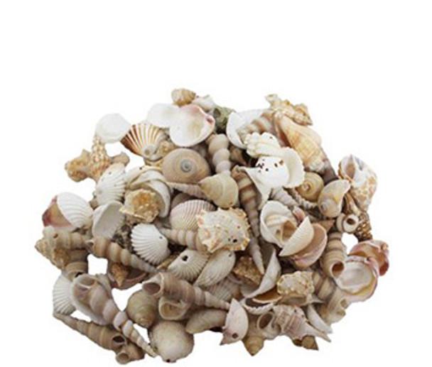 Small Drilled Seashell Mix