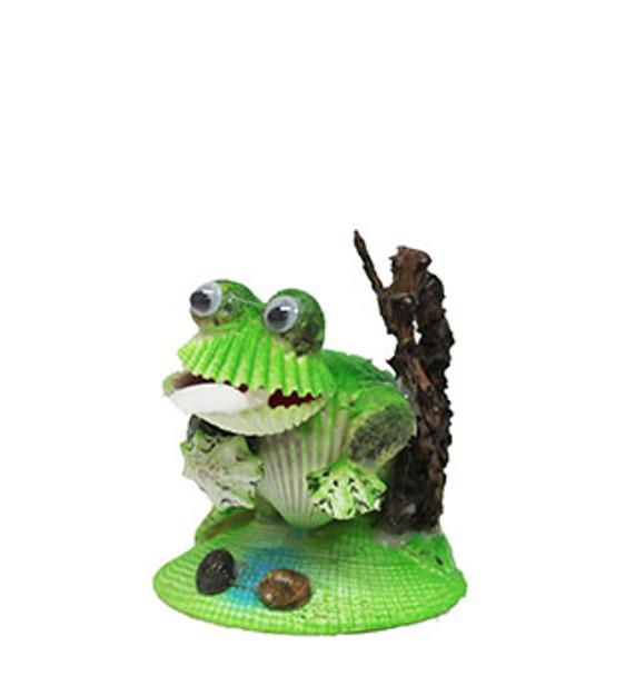 Strombus Canarium Frog