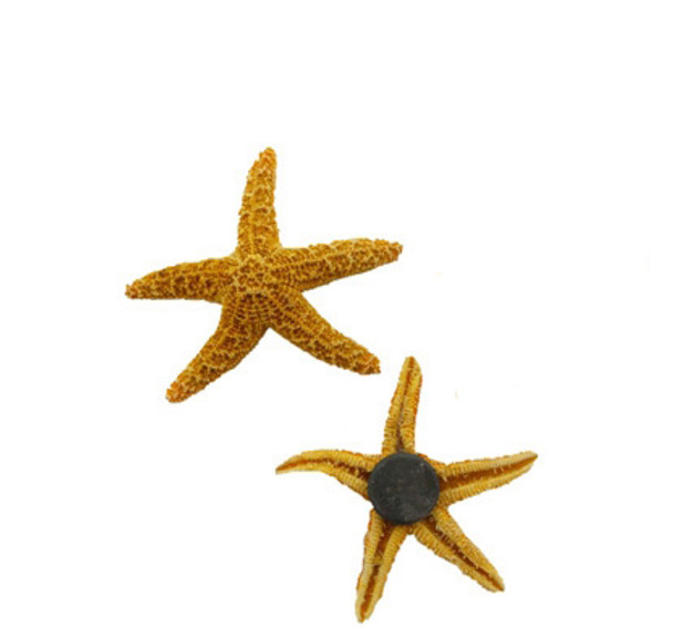 Sugar Starfish Seashell Magnets