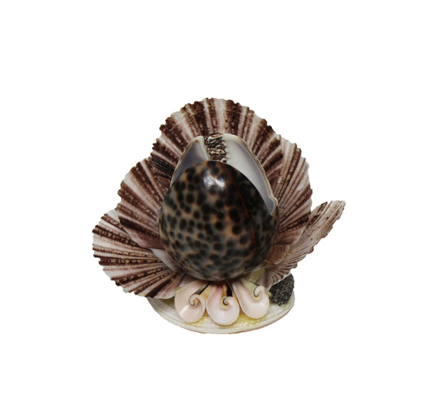 Tiger Cowrie Seashell Napkin Holder