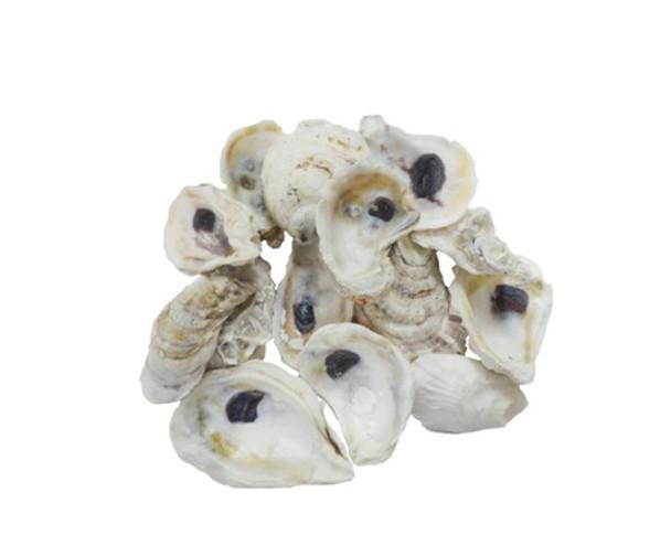 Oyster Seashells