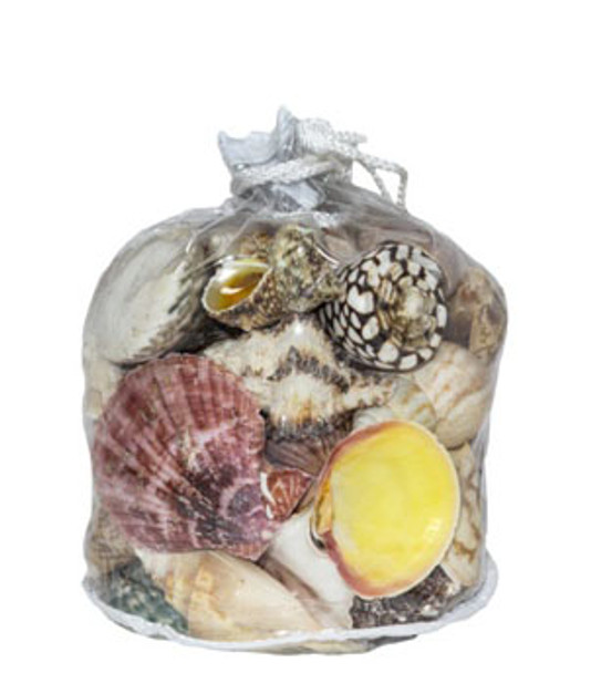 Designer Shell Gift Bag
