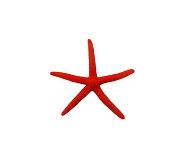 Dark Red Dyed Finger Starfish