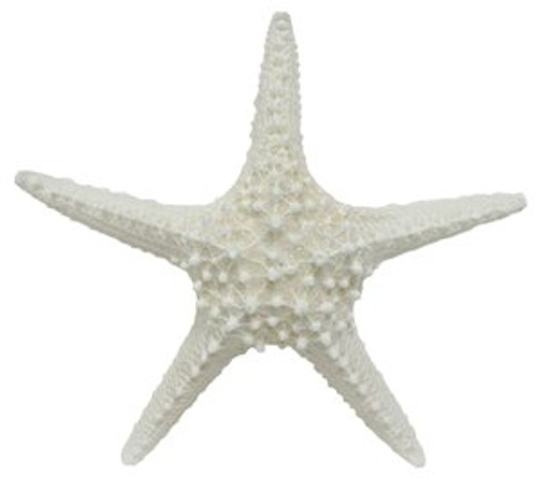 White Spiny Starfish