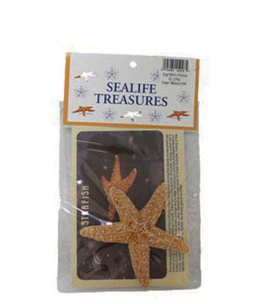 Sugar Starfish W/Postcard
