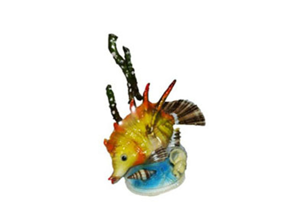 Lambis Lambis Fish Novelty