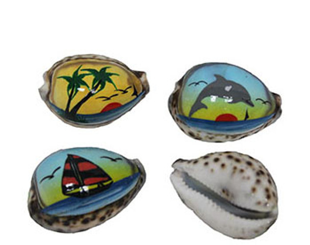 Painted Tiger Cowries