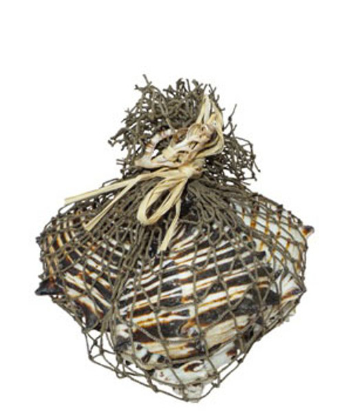 Black Murex W/Decorative Net