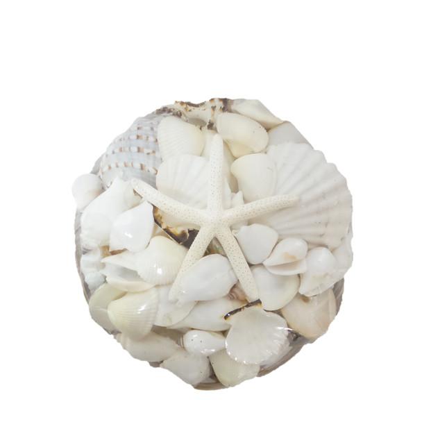"""10"""" Midrib Shell Pack W/White Mix & White Finger Starfish"""