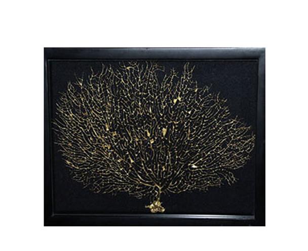Gold Seafan In Shadow Box