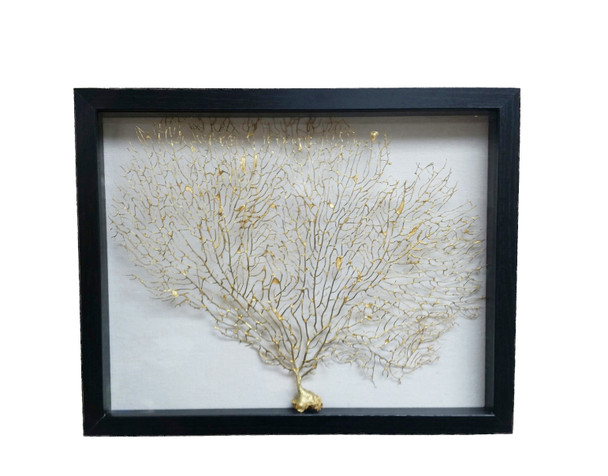 Gold Seafan In Shadow Box