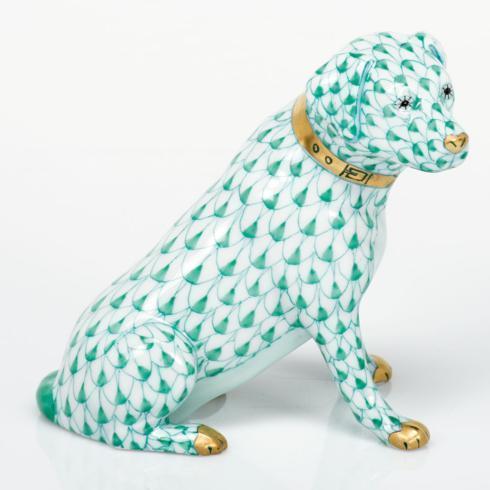 Labrador Retriever - Green
