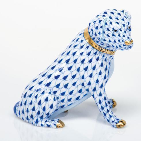 Labrador Retriever - Sapphire