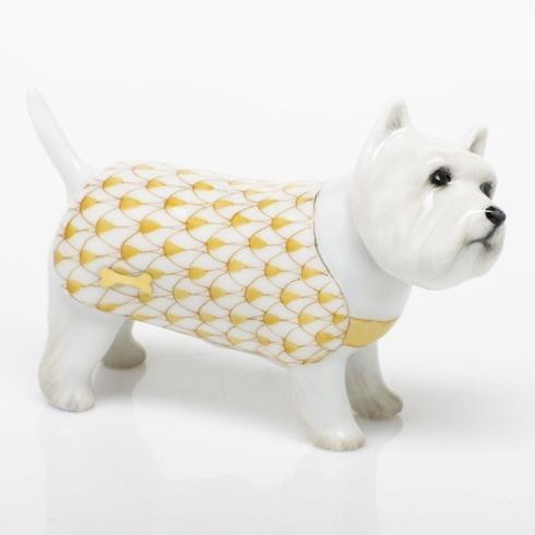 West Highland Terrier - Butterscotch