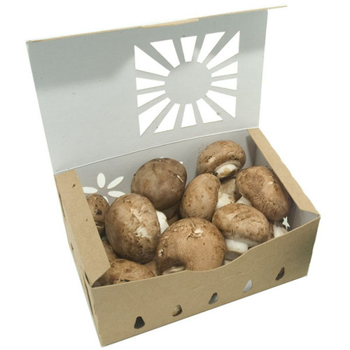 mushroom packaging containers