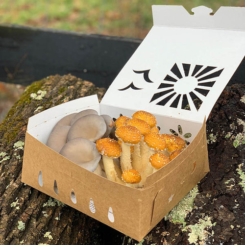 2 quart reversible paper mushroom containers