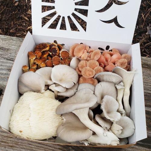 3 Quart reversible paper mushroom containers