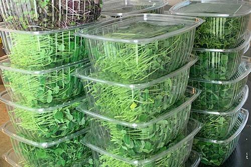 Microgreen Packaging