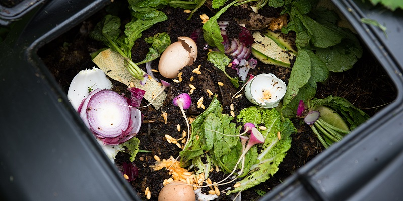 food in a compost pile