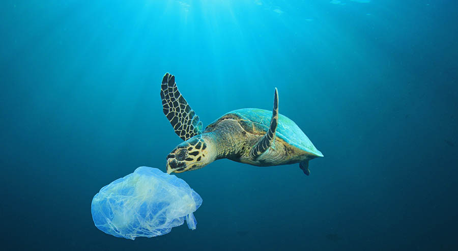 plastic bags in the ocean with a turtle