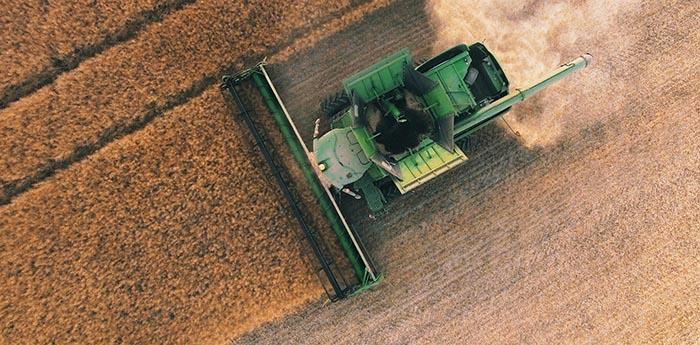 wheat-farming.jpg