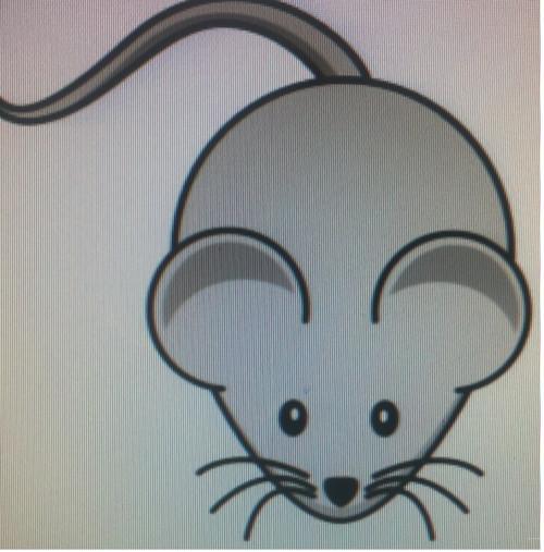 Hairless Mice 1kg