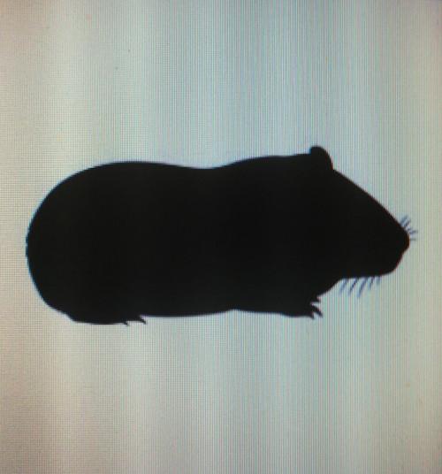 Guinea pig small <300 g 10kg