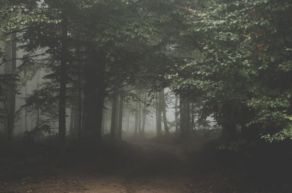 A Reforestation Partnership