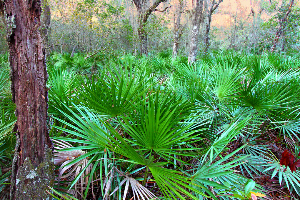 Saw Palmetto Might not be Your Wonder Tonic