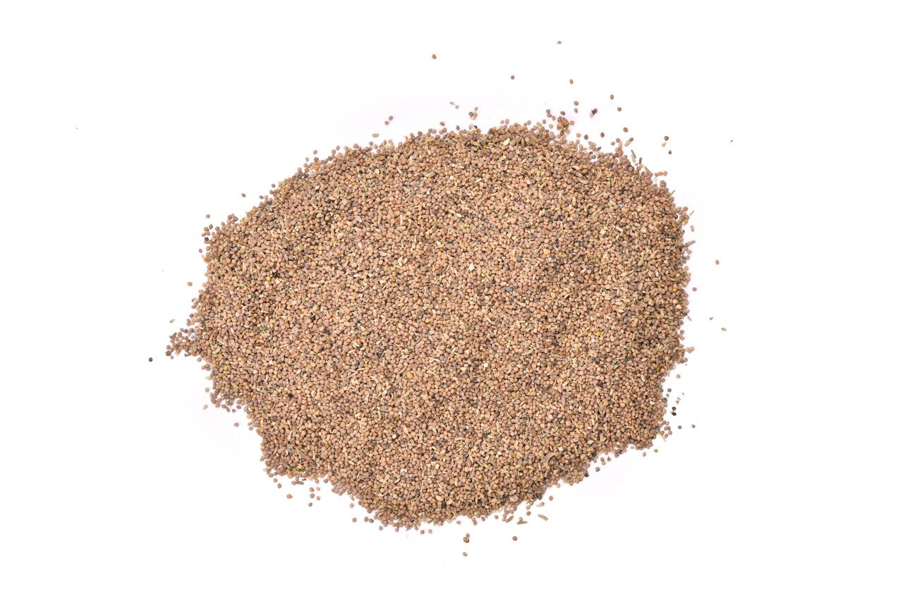 RAW Forest Foods TapRoot Extract Powder — The Deep Jing Formula