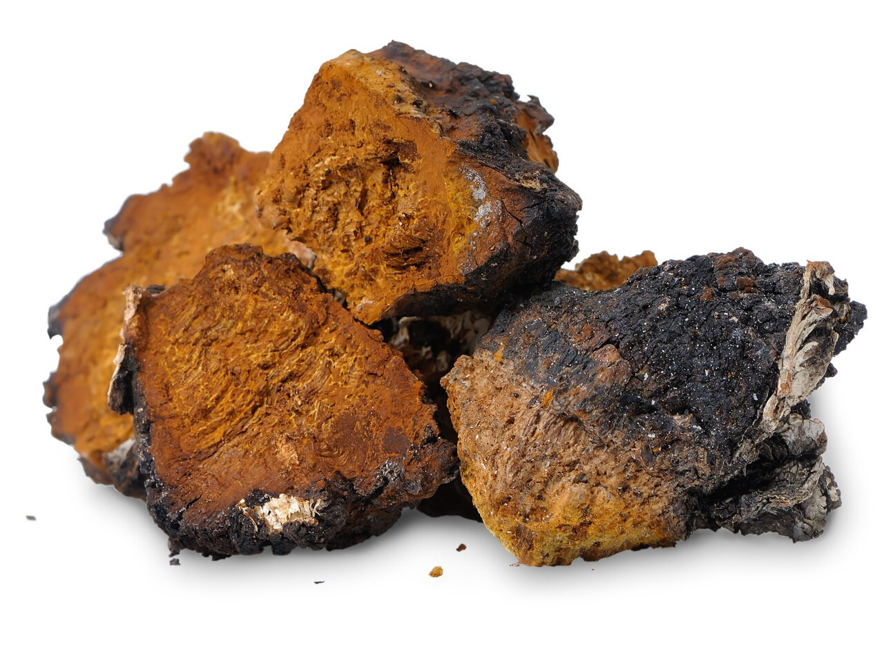 Tea Chaga Mushroom 50gAltai Siberian TundraBirch FungusFAST DELIVERY