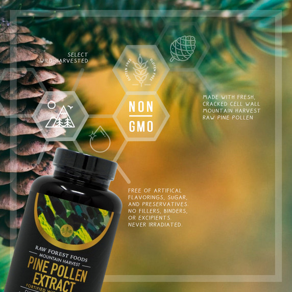 RAW Forest Foods Pine Pollen Extract Capsules — Unstandardized and Fortified with Piperine — Mountain Harvest