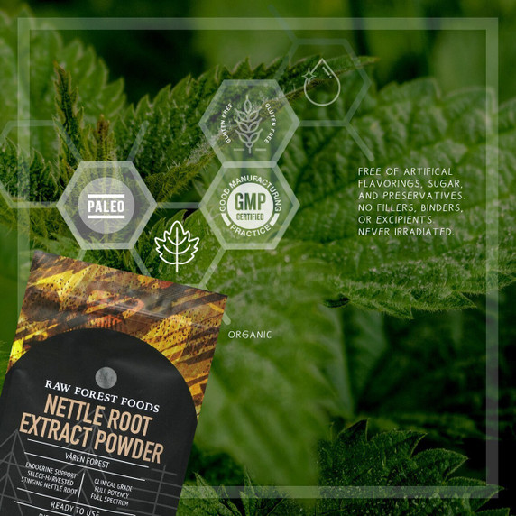 RAW Forest Foods Nettle Root Extract Powder — Full Potency, Full Spectrum, and Unstandardized