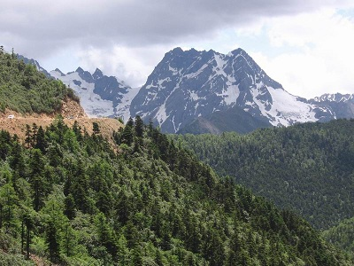 Pine Forests in NW Yunnan
