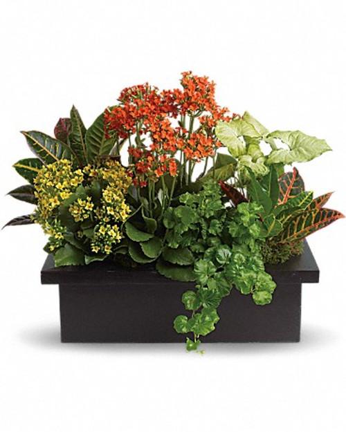 The Flowering Dish Garden-FNPFM-03